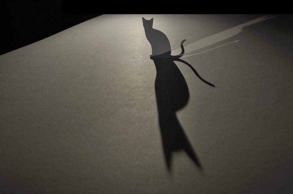 Garden of Schrödinger cats - Takeo Sugamata